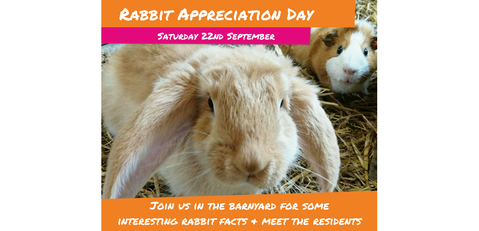 Rabbit Appreciation Day Image