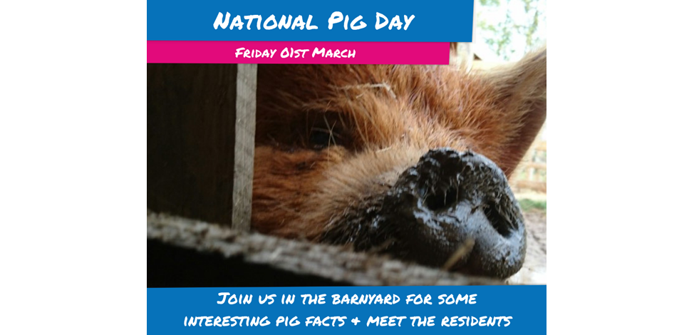 National Pig Day 1  Image